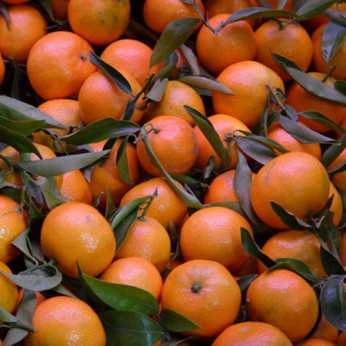 Cold Preseed Mandarin Essential Oil