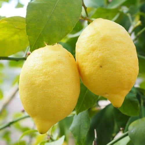 Cold Pressed Lemon Essential Oil
